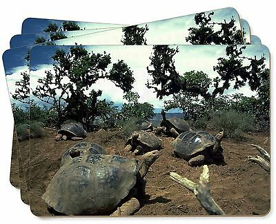 Galapagos Tortoise Picture Placemats in Gift Box, AR-T11P