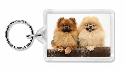 Pomeranian Dogs Photo Keyring Animal Gift, AD-PO91K