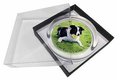 Personalised Name Collie Glass Paperweight in Gift Box Christmas P, AD-CO69DA2PW