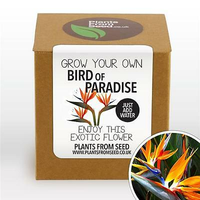 Plants From Seed - Grow Your Own Bird Of Paradise Plant Kit