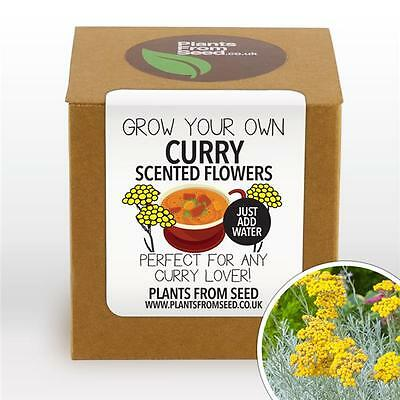 Plants From Seed - Grow Your Own Curry Scented Flowers Plant Kit