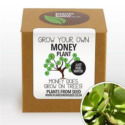 Plants From Seed - Grow Your Own Money Plant Kit