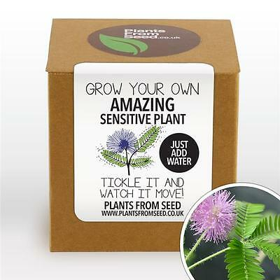 Plants From Seed - Grow Your Own Sensitive Plant Kit