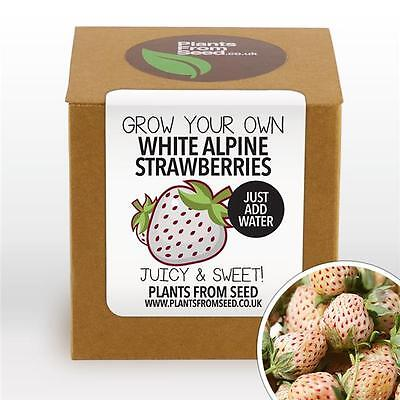 Plants From Seed - Grow Your Own White Alpine Strawberries Plant Kit