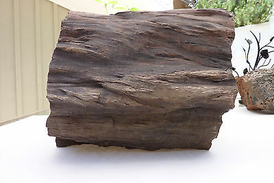 LARGE PETRIFIED WOOD LOG GORGEOUS 46+ lb MINERAL, ROCK ANTIQUE Collector Fossil