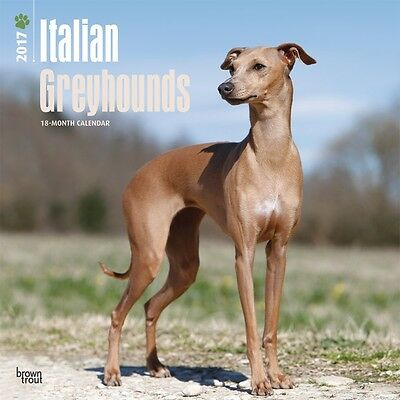 Italian Greyhounds 2017 Wall Calendar NEW by Browntrout