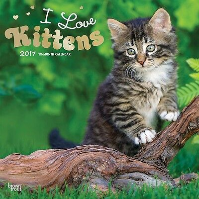 I Love Kittens 2017 Wall Calendar NEW by Browntrout