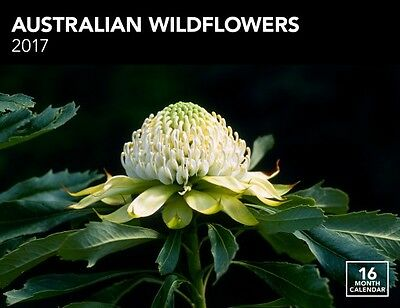 Australian Wildflowers 2017 Wall Calendar NEW by Browntrout
