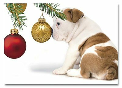 English Bulldog Adorable Puppy Dog  Nose on Ornament Holiday 12 Christmas Cards