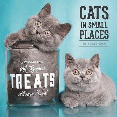Cats in Small Places 2017 Wall Calendar NEW by Paper Pocket