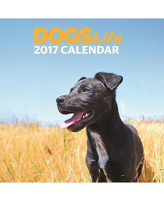 Dogs Life 2017 Wall Calendar NEW by Paper Pocket