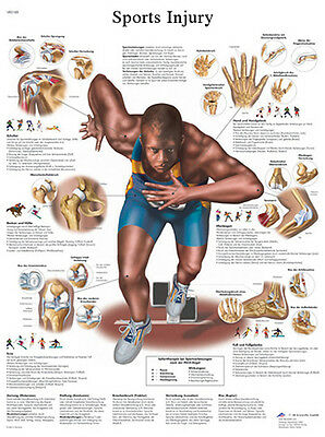 Anatomical Chart - sports injuries, paper  1 EA