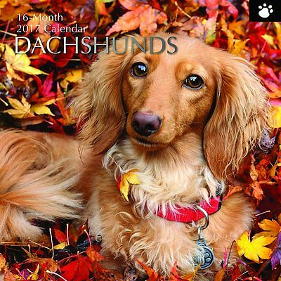Dachshunds 2017 Wall Calendar NEW by the Gifted Stationery