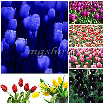12Pcs Tulip Bulbs Flower Rare Corms Seeds Variety Fresh Bulbous Root Planted New
