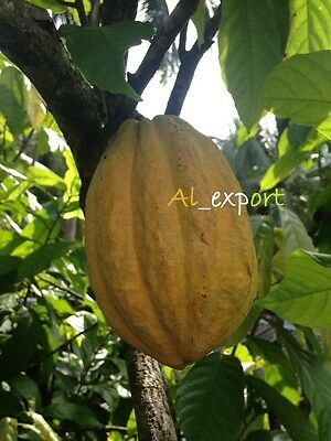 1 whole Cacao   POD and guava 50+ seeds ,ORGANIC Tropical Fruit.germinete seeds