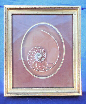 "BEAUIFUL CHAMBERED 5 1/2"" NAUTILLUS SLICE  FRAMED IN 8 5/8"" by 9"" GOLD SHADOWBOX"