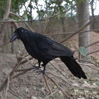 Hot Realistic Blackbird Halloween Prop Feathered Crow Raven Fancy Accessory New