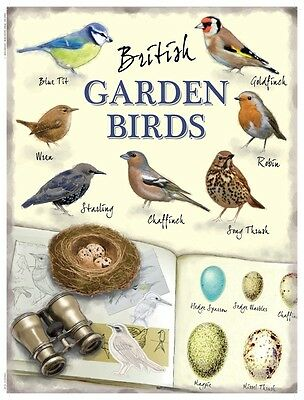 New 15x20cm British Garden Birds robin wren retro small metal wall chart sign