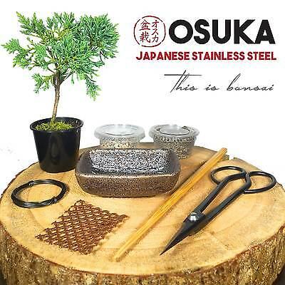 Bonsai Tree Starter Kit (SHIMPAKU) + OSUKA Stainless Steel Scissors