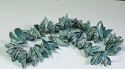 "1 String Sea Shell Clam Beads   Beads ,""sea Green"""