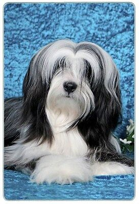 Tibetan Terrier Cutting Board