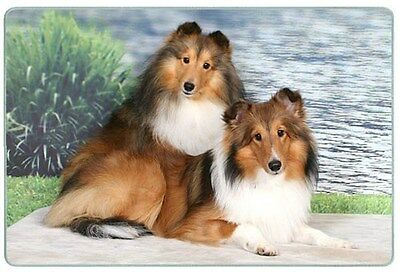 Shetland Sheepdog Cutting Board