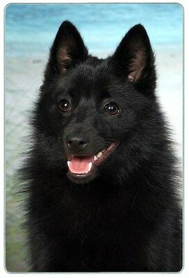 Schipperke Cutting Board