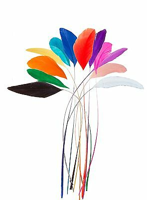 """Stripped Coq Rooster Feathers 10""""-12"""" Millinery Craft Fly Tying Weddings"""