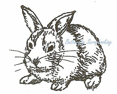 Cotton Tail Bunny Rabbit Wood Mounted Rubber Stamp Northwoods Rubber Stamp New