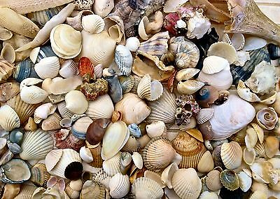 Aquarium Beach Natural Craft Sea Shell Wedding Decoration Table Tank Water