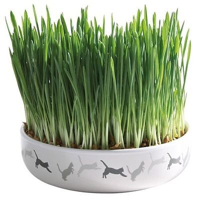 Pet Cat Kitten Ceramic Bowl with Seed Cat Grass Supplementary Green Food TRIXIE