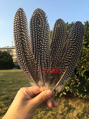 Wholesale 10 / 20/50pcs/20-25 cm / 8-10 inch beautiful guinea fowl feather