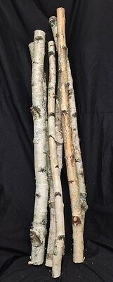Birch Tree Branch 36""