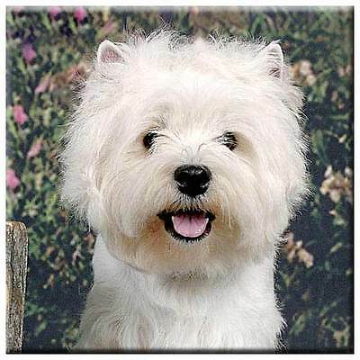"West Highland White Terrier 4"" Tile"