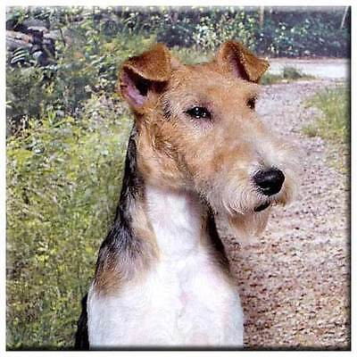 "Wire Fox Terrier 4"" Tile"