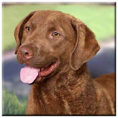 "Chesapeake Bay Retriever 4"" Tile"