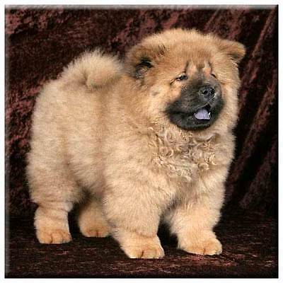 """Chow Chow 4"""" Decorative, Cork Backed, Ceramic Tile"""