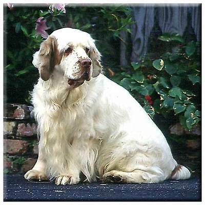 "Clumber Spaniel 4"" Decorative, Cork Backed, Ceramic Tile"