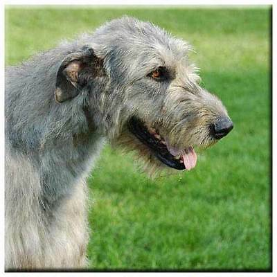 "Irish Wolfhound 4"" Tile"