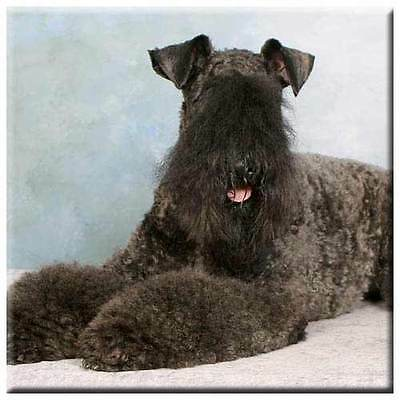 "Kerry Blue Terrier 4"" Decorative, Cork Backed, Ceramic Tile"