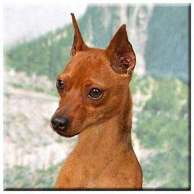"Miniature Pinscher 4"" Tile"