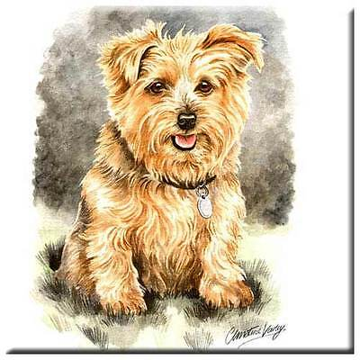 "Norfolk Terrier 4"" Tile"