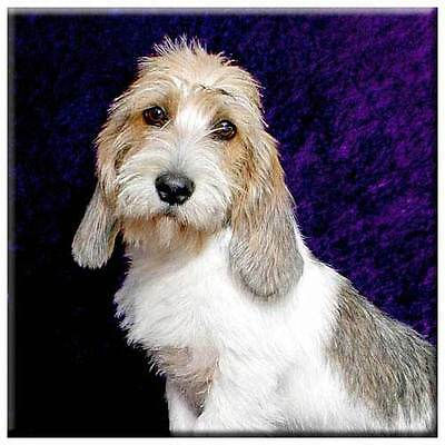 "Petit Basset Griffon Vendeen 4"" Decorative, Cork Backed, Ceramic Tile"