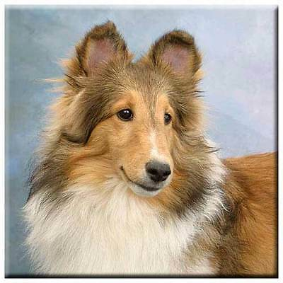 "Shetland Sheepdog 4"" Decorative, Cork Backed, Ceramic Tile"
