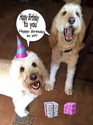SINGING HAPPY BIRTHDAY FrOm tHe DOGS