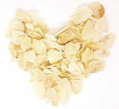 Slowfall Natural Real Dried Petal Biodegradable Wedding Confetti Ivory 1 Litre