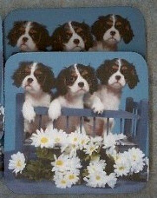 CAVALIER KING CHARLES SPANIEL PUPS Rubber Backed Coasters #0678