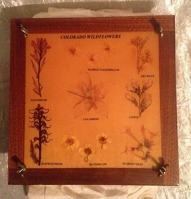 """Vintage Wooden Flower Press 'Colorado Wildflowers' 9"""" x 9"""" x 2 1/4"""" by Blossom's"""
