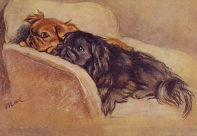 Pekingese Dogs Drawing by Lucy Dawson 1937's - LARGE New Blank Note Cards