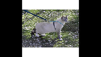 PetSafe Come With Me Kitty Harness and Bungee Leash, Sparkle Blue, Medium